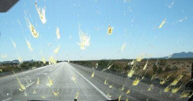 Otomobil Camında ki Sivrisinek Kalıntıları İçin Ne Yapmak Gerekiyor?